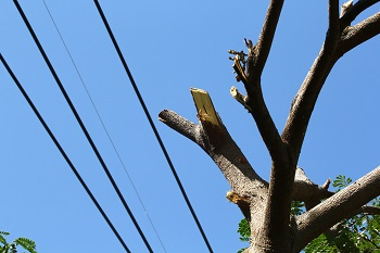 Emergency-Tree-Removal-Service-Snoqualmie-WA