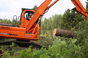Tree-Clearing-Burien-WA