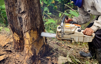 Tree-Limb-Removal-Snoqualmie-WA