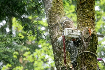 Tree-Removal-Services-Bellevue-WA