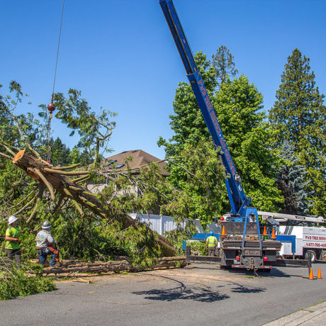 Crane Moving Cedar Tree - Our crane will safely lift the tree from your yard and move it to a safety zone. We utilize the crane as often as possible to save you time and money.