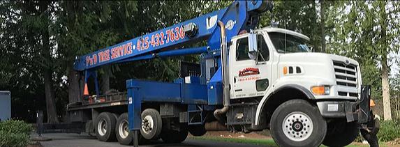 Crane-Tree-Removals