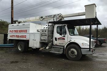 Emergency-Tree-Removal-Bellevue-WA