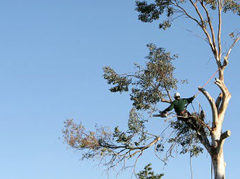 Emergency-Tree-Removal-Service-Issaquah-WA