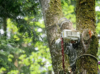 Emergency-Tree-Removal-Service-Sammamish-WA