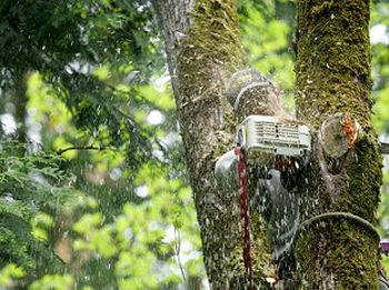 Storm-Damage-Tree-Removal-Des-Moines-WA