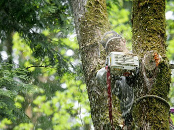 Storm-Damage-Tree-Removal-Mercer-Island-WA