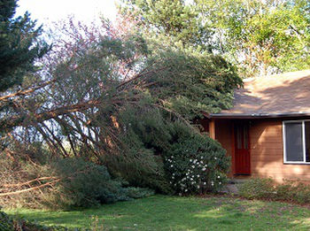 Storm-Damage-Tree-Removal-Seatac-WA