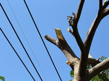 Stump-Grinding-Service-Burien-WA