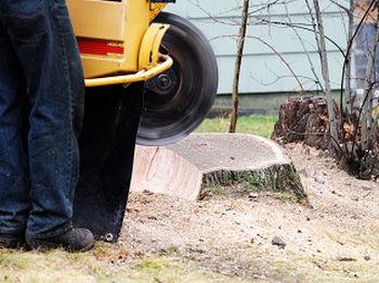 Stump-Grinding-Service-Seattle-WA