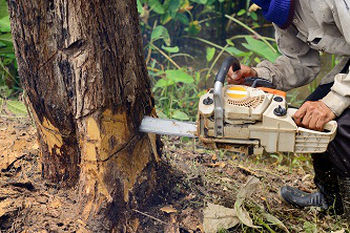 Stump-Removal-Sammamish-WA
