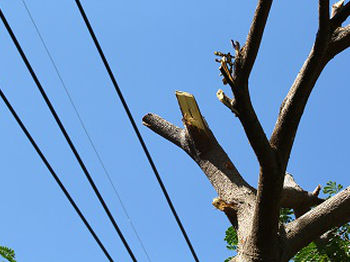 Tree-Removal-Burien-WA