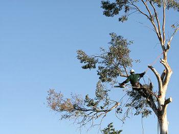 Tree-Removal-Crossroads-WA