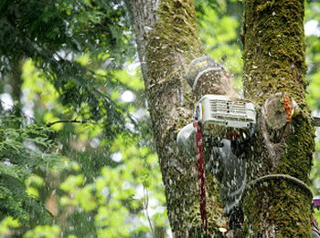 Tree-Removal-Edgewood-WA