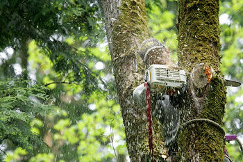 Tree-Service-Company-Browns-Point-WA