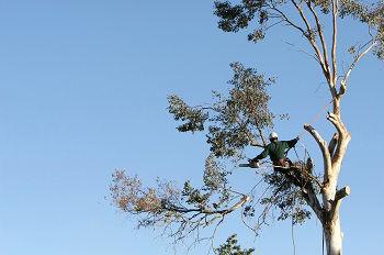 Tree-Service-Company-Kirkland-WA