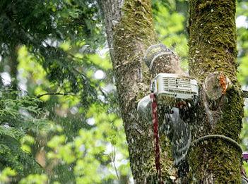 Tree-Service-Company-Ravensdale-WA