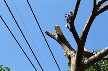 Tree-Service-Company-Sammamish-WA