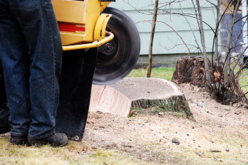 Tree-Stump-Removal-Browns-Point-WA