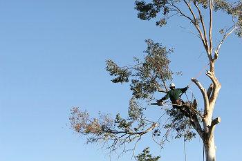 Tree-Trimming-Mercer-Island-WA