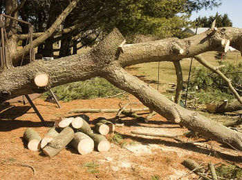 Trimming-Trees-Covington-WA