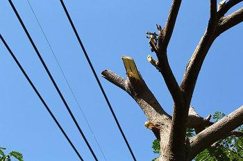 Trimming-Trees-Sammamish-WA