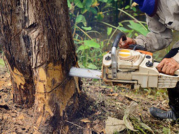 Trimming-Trees-Snoqualmie-WA