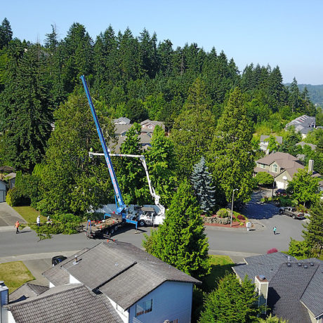 Aerial Picture - Drone footage showing the crane lifting a Cedar tree out of a back yard to the safety area.