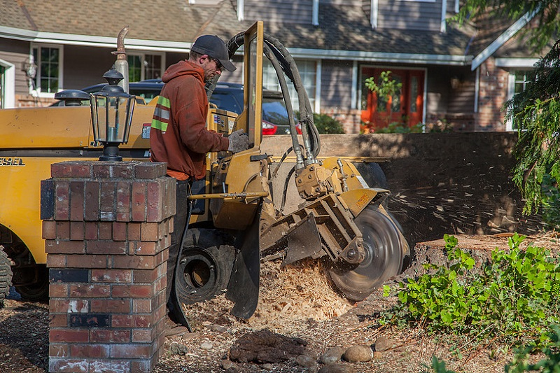 Grinding a Stump - Ryan is working on grinding down a large Douglas Fir tree stump. If you have a old tree stump that you would like removed contact us today.