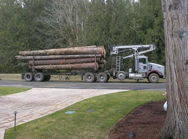 Log Truck Load
