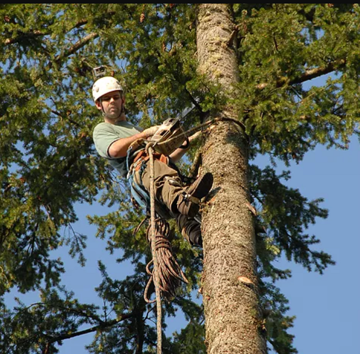 Trimming Branches - We will climb your trees to trim your branches. View clearing and thinning is a common request for our customers.
