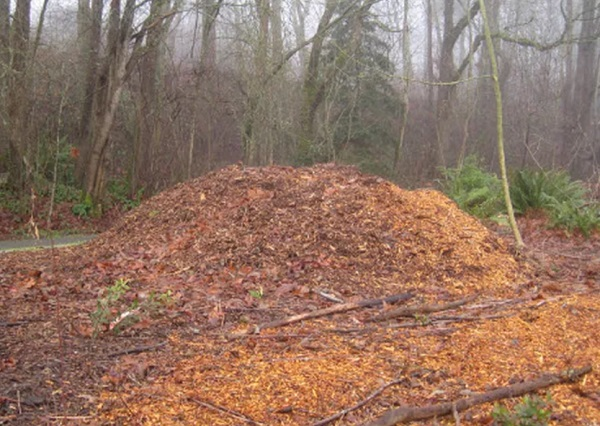 Wood chip mulch: Landscape boon or bane?