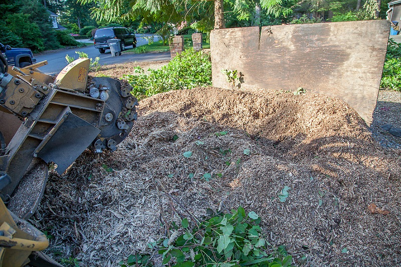 Wood Chips - All that is left is a pile of wood chips that makes excellent  ground cover.