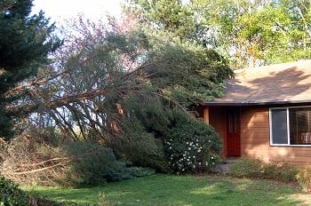 Fallen-Tree-Removal-South-Cle-Elum-WA