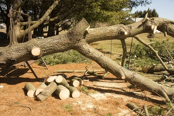 Storm-Damage-Tree-Removal-South-Cle-Elum-WA