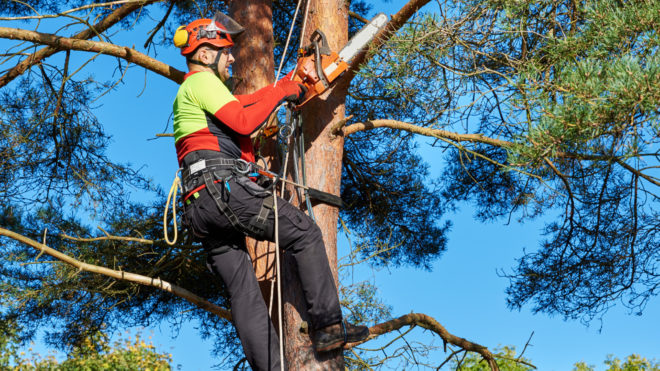 5 Facts to Know Before Hiring a Local Arborist
