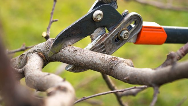 Have You Over Pruned Your Trees? Here's How You Can Tell