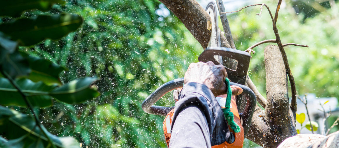 7 Key Questions to Ask Before Hiring a Tree Removal Company