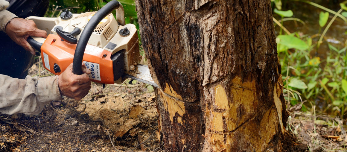"""The Dangers and Liabilities of """"Cheap Tree Removal"""""""