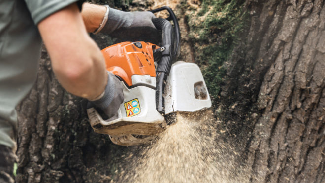 A Homeowner's Guide to Hiring Professional Tree Cutting Services
