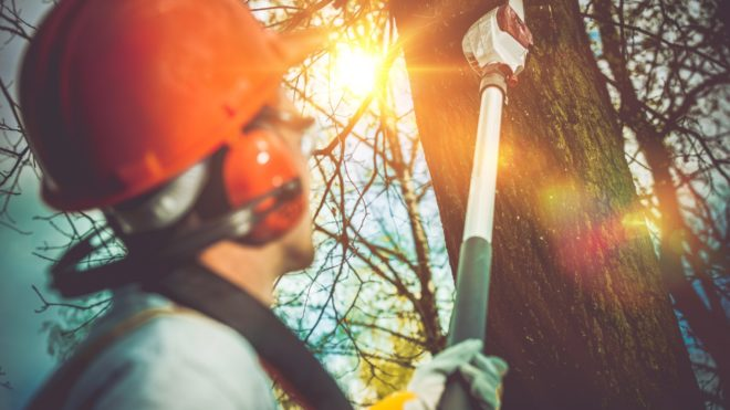 How Much Do Tree Removal Services Cost?