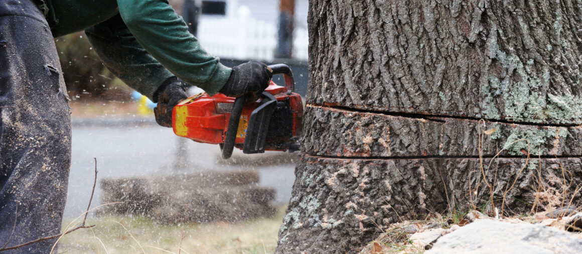 How to Remove a Tree Stump Quickly and Easily