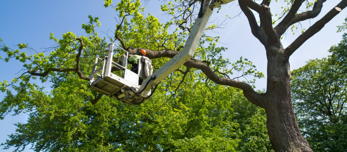 6 Signs You Need to Hire Tree Trimming Services