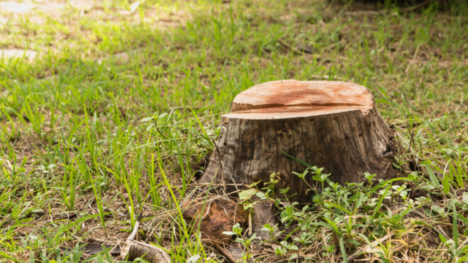4 Reasons Why You Should Consider Professional Tree Removal