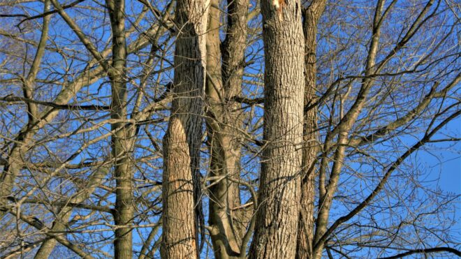 The Telltale Signs of a Dangerous Tree (and What to Do About It!)